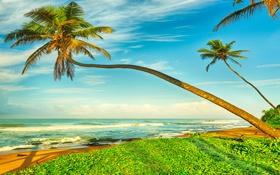 Обои песок, море, пляж, пальмы, берег, summer, beach