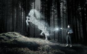 Обои лес, конь, человек