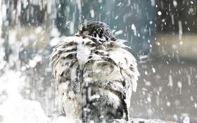 Картинка фон, дождь, птица