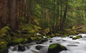 Обои лес, вода, деревья, река, камни, мох, поток