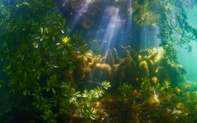Обои лучи, свет, Тихий океан, Палау, Филиппинское море, мангровый лес