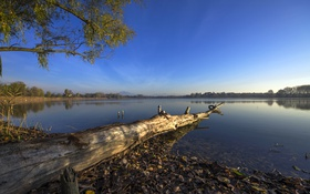 Картинка небо, озеро, дерево, берег, Италия, коряга, Veneto