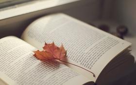 Обои текст, лист, книга, страницы, кленовый