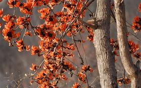 Картинка деревья, цветы, весна, лепестки
