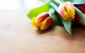 Обои цветы, тюльпаны, натюрморт