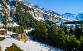 Обои зима, снег, деревья, горы, скалы, Швейцария, склон