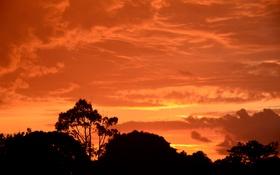 Картинка силуэты, небо, облака, закат