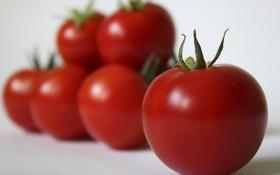 Обои макро, овощи, томат, помидор