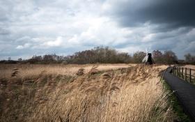 Обои поле, природа, мельница