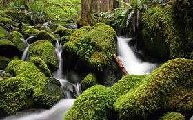 Обои зелень, вода, река, камни, мох, поток