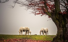Обои туман, дерево, кони