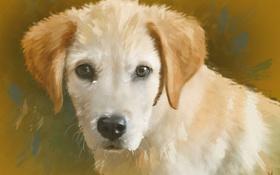 Обои портрет, собака, щенок