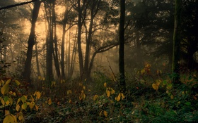 Картинка осень, лес, деревья, туман, Англия, Dockray