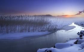Обои зима, закат, река, камыш