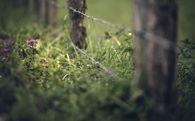 Обои забор, трава, лето