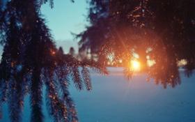 Обои зима, солнце, снег, ветки, елка