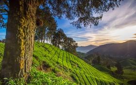 Картинка деревья, горы, природа, склон, Малайзия, Паханг