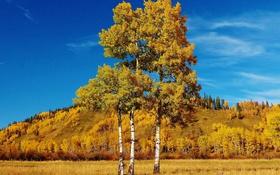 Картинка деревья, листья, Альберта, холмы, трава, Канада, осень
