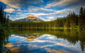 Обои лес, озеро, отражение, гора, Канада, Альберта, Banff National Park