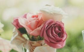 Обои лепестки, розы, цветы