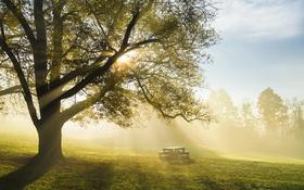 Обои дерево, утро, парк, стол, свет, туман, скамья