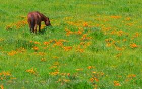 Обои трава, цветы, лошадь, луг