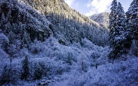 Обои зима, лес, снег, деревья, горы, ущелье