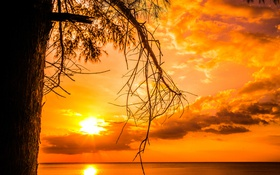 Обои горизонт, вечер, дерево, закат, лучи, облака, солнце