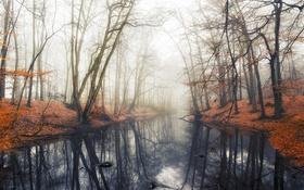 Обои Лес, осень, вода, отражение, туман, деревья, пруд