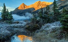 Обои иней, трава, деревья, туман, ручей, Канада, Banff National Park