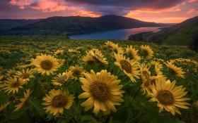 Обои закат, цветы, река