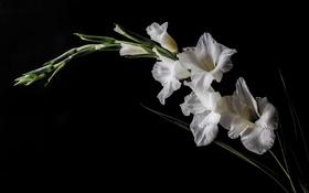 Обои фон, природа, цветы