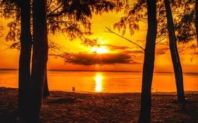 Обои солнце, лучи, деревья, закат, дети, берег, вечер