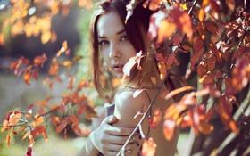 Обои листья, осень, Patricia Bolea, портрет