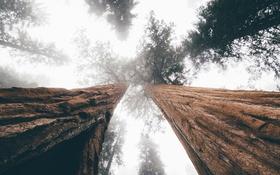 Обои небо, листья, деревья, ветки, листва, ствол, кора
