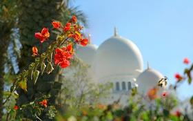 Обои цветы, купол, ОАЭ, Абу-Даби, мечеть шейха Зайда