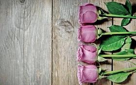 Обои розы, pink, flowers, roses
