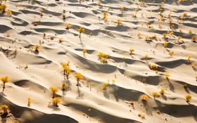 Обои песок, осень, деревья, пустыня, Китай