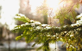 Обои снег, иголки, ветки, елка