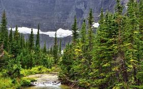 Обои лес, снег, деревья, скалы, течение, речка