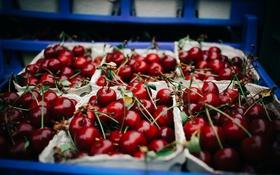 Обои вишня, ягоды, много, черешня, бордовые