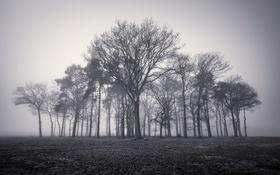 Обои деревья, природа, туман