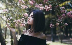 Картинка цветы, ветки, дерево, стрижка, брюнетка