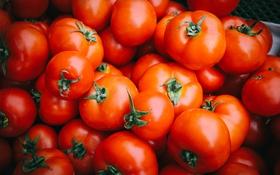 Картинка красные, овощи, помидоры, много, томаты