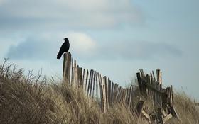 Картинка небо, птица, забор