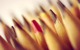 Обои макро, фон, карандаши