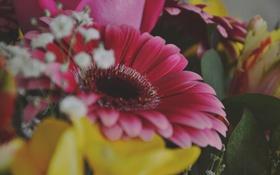 Обои цветы, букет, герберы