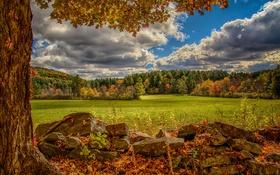Картинка осень, лес, камни, дерево, луг, Virginia, Виргиния