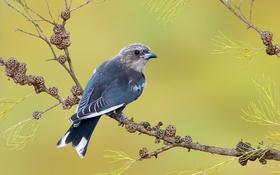 Обои природа, птица, ветка, сумеречный артам