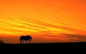 Обои ночь, природа, конь